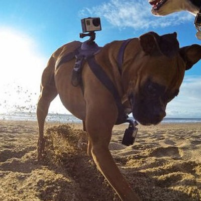 GoPro Kamera Hundehalterung